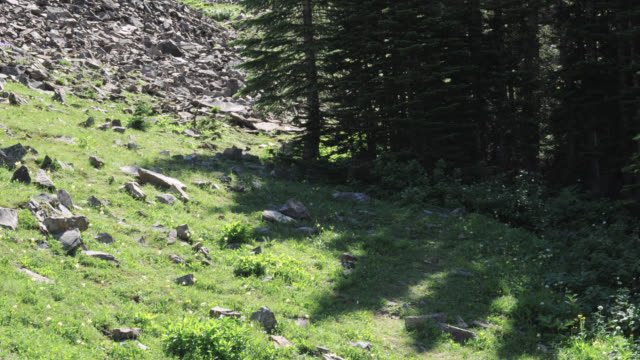 stockvideo's en b-roll-footage met timelapse tree shadows track over grass on mountainside, banff, canada - schaduw