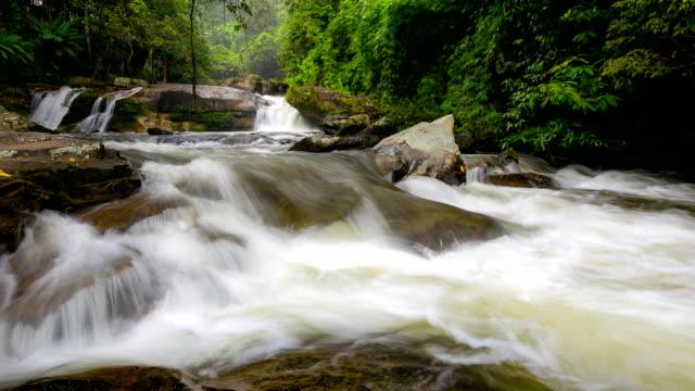 vídeos y material grabado en eventos de stock de hd time-lapse: cascada en bosque tropical - árbol tropical
