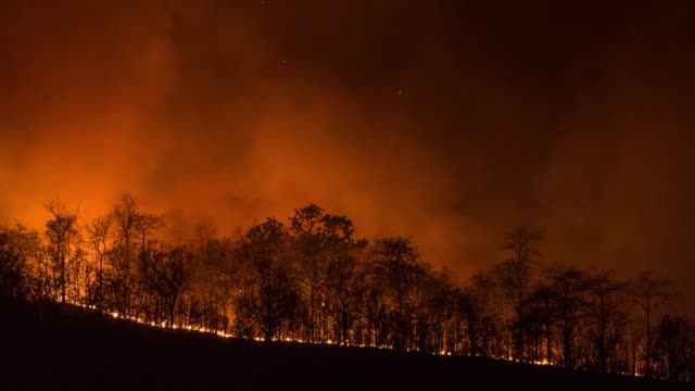 4k t/l timelapse wildfire line on hillside at night - forest fire stock videos & royalty-free footage