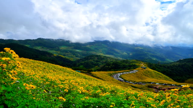 time-lapse: yellow sunflower meadows on high mountain in spring season - hd 25 fps stock videos & royalty-free footage