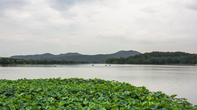 4k time-lapse:a large sacred lotus field on the west lake with clouds moving,hangzhou,china - sacred lotus stock videos and b-roll footage