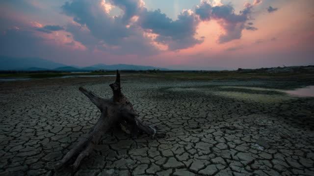 vídeos y material grabado en eventos de stock de lapso de tiempo :  agrietado tierra cerca del lago seco en temporada seca - dead animal