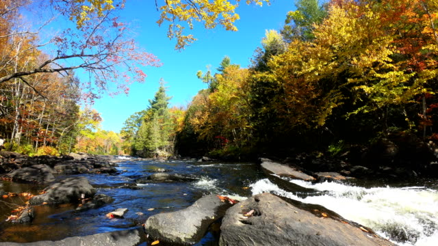 time-lapse:fall colours, greater toronto area - toronto stock videos & royalty-free footage