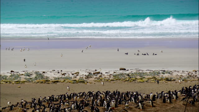 time-lapse:penguin on south georgia island - south georgia island stock videos & royalty-free footage