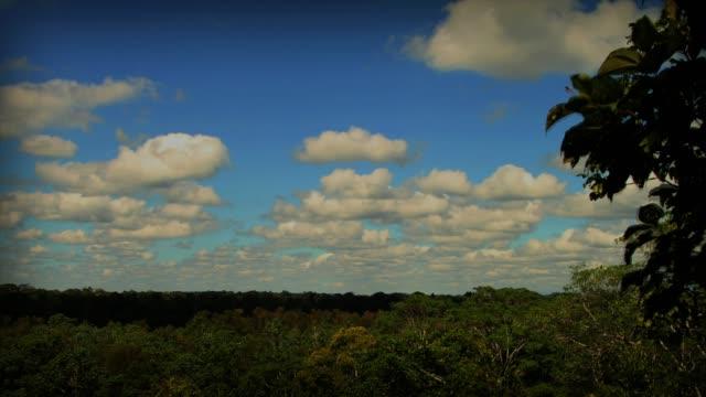 vídeos de stock, filmes e b-roll de timelapses tambopata national reserve - madre de dios - peru - tambopata