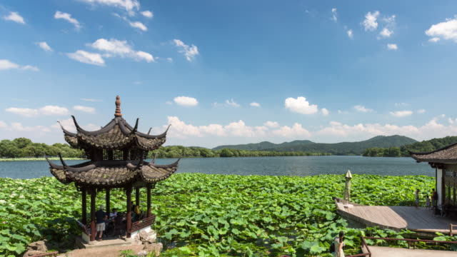 4k time-lapse:the pavilion and marble boat surrounded by sacred lotus field on the west lake against blue sky and white clouds,hangzhou,china - sacred lotus stock videos and b-roll footage