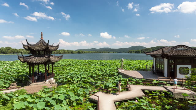 4K Time-lapse:Tourists walking along jetty on lotus field and playing cards under pavilion with blue sky and white clouds,Hangzhou,China