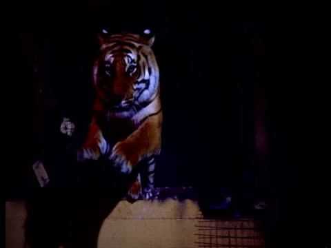 timeslice sequence of tiger leaping from circus wagon, frozen in time. - circus stock videos & royalty-free footage