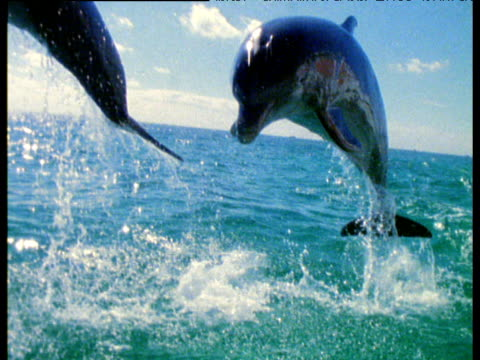 Timeslice shot around dolphins leaping out of sea