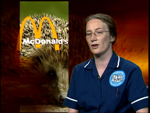 vídeos de stock, filmes e b-roll de tina swindle interview sot the hedgehogs put their heads into the carton but because of the lip around the top they get their heads stuck and then... - embalagem cartonada