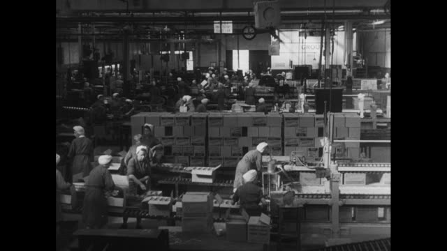 tinned plums are packed into boxes; 1952 - box container stock videos & royalty-free footage