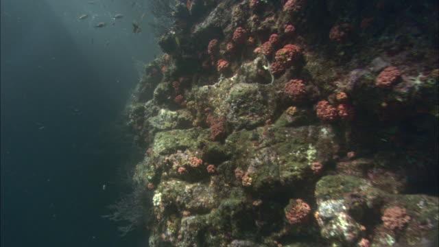 tiny fish swim around colorful coral in the sea of cortez. - スポンジ点の映像素材/bロール