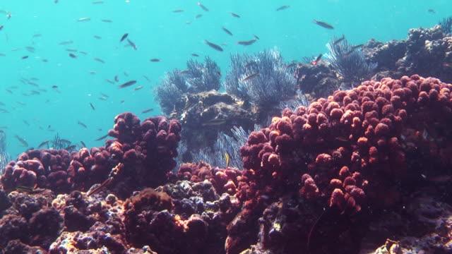 Tiny fish swim around rocks and corals.