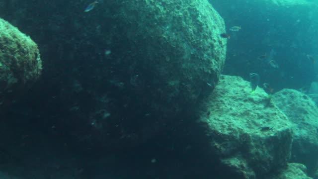 tiny fish swim around rocks. - futter suchen stock-videos und b-roll-filmmaterial