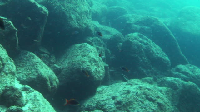 tiny fish swim around rocks. - 食糧を捜す点の映像素材/bロール