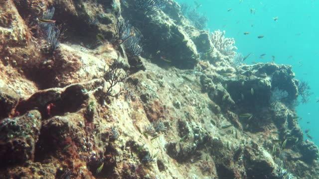 tiny fish swim around sun-dappled rocks. - dappled light stock videos and b-roll footage