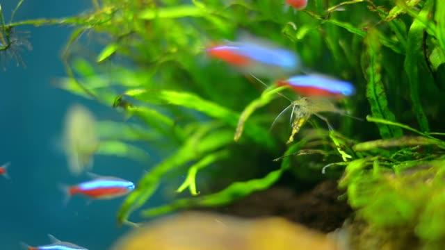 tiny fishes in small aquarium