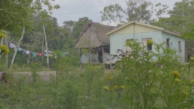 vídeos de stock, filmes e b-roll de tiny houses in the amazon rainforest with a hen walking free in the garden   in pando / bolivia - no alto