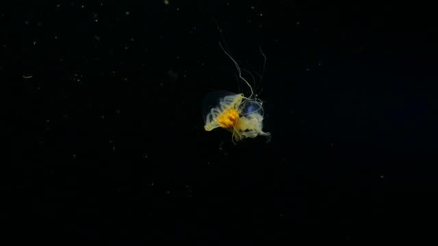 winzige quallen schwimmen im dunklen ozean in taiwan - klein stock-videos und b-roll-filmmaterial