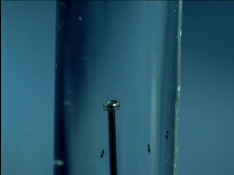 tiny parasitic aquatic prestwichia wasps swim in test tube containing pin for scale - 淡水点の映像素材/bロール
