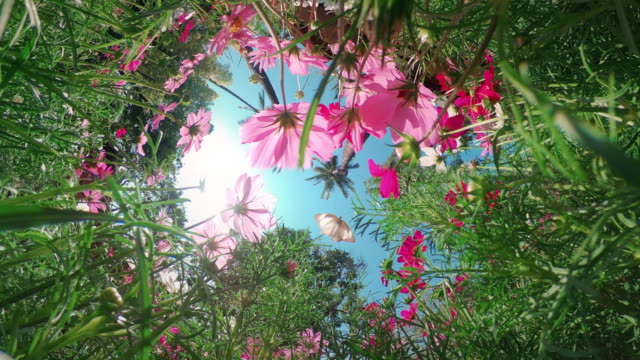 tiny planet 360 flower field - farfalla video stock e b–roll