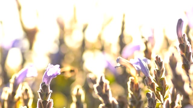 tiny purple garden - blossom stock videos & royalty-free footage