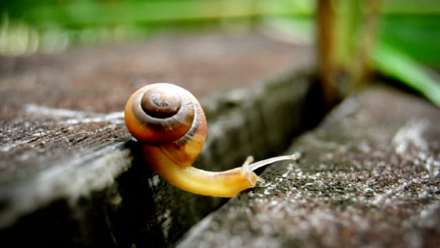 tiny snail - reaching and climbing - snail stock videos & royalty-free footage
