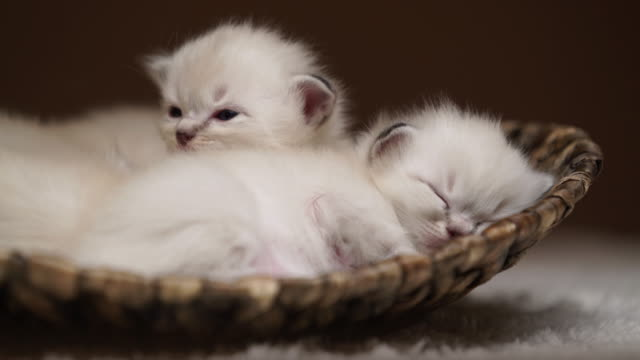 tiny tired kittens - basket stock videos and b-roll footage