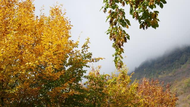 vidéos et rushes de bout de l'arbre avec des lames jaunes dans la vidéo de fond d'automne - branche partie d'une plante