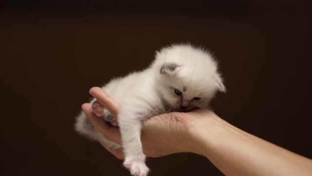 tired baby cat on hand