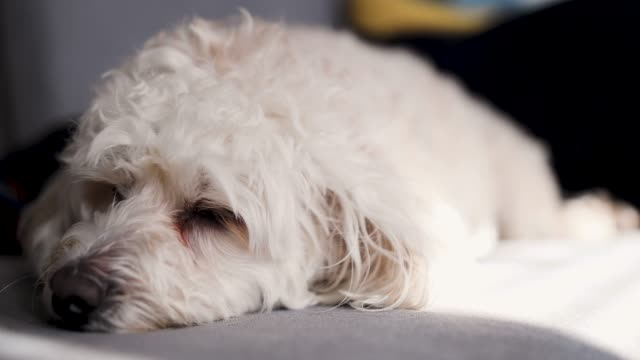tired dog - dog blinking stock videos & royalty-free footage