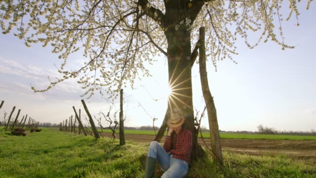 tired farmer resting under tree in sunny,idyllic vineyard,real time - napping stock videos & royalty-free footage