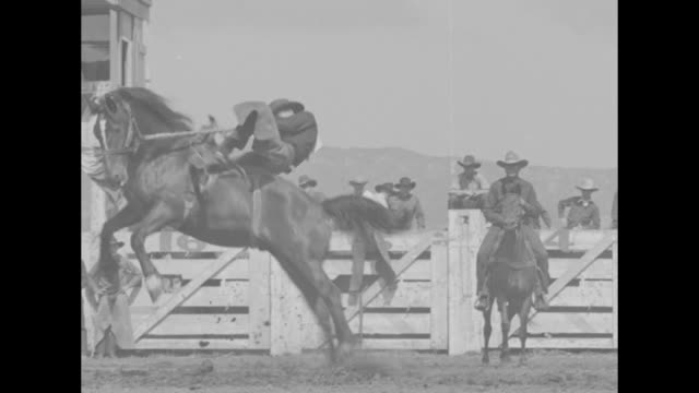 california superimposed over cowboy riding bucking bronco at rodeo / several shots of cowboys riding bucking broncos / cowboy rides steer / three... - bucking bronco stock videos & royalty-free footage