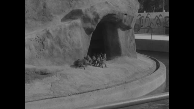 600 monks at peace until food arrives / title hollywood superimposed over monkeys emerging from cave in constructed island enclosure on tourist... - jump shot stock videos and b-roll footage