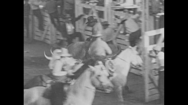 broncos bust cowboys in rough rodeo / rodeo with cowboys riding steers coming out of gate and being thrown / cowboys coming out of gate on bucking... - bocksprång bildbanksvideor och videomaterial från bakom kulisserna
