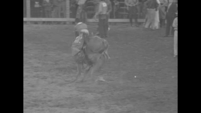 broncs bustup busters / ms man riding bucking bull shoots out of gate before finally being thrown off / ms bull is bucking so ferociously that rider... - bucking stock videos & royalty-free footage