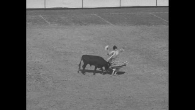 cowing the bulldescribed by teddy bergman / nearly a dozen clowns dressed alike entertain by provoking young bull in arena one has cape / crowd in... - スラップスティックコメディ点の映像素材/bロール