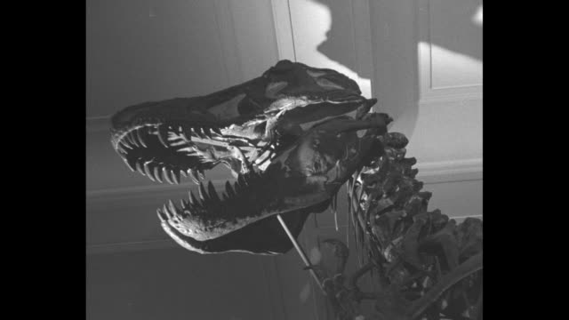 """dinosaur, science to hunt biggest monster"" / towering skeleton of tyrannosaurus rex / american museum of natural history curator dr. barnum brown... - curator stock videos & royalty-free footage"