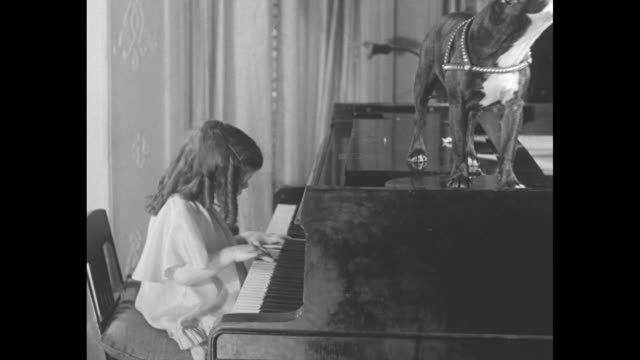 dog days are here again for 3yearold pianist hitandmiss gertrude troutman of washington staggers 'through the rye' / vs gertrude wearing sausage... - terrier stock-videos und b-roll-filmmaterial