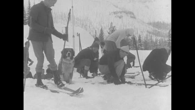 dog lifesavers giant st bernards trained for rescue work on slope of mt hood ore / ms profile view of two st bernard dogs in foreground skiers in the... - injured stock videos & royalty-free footage