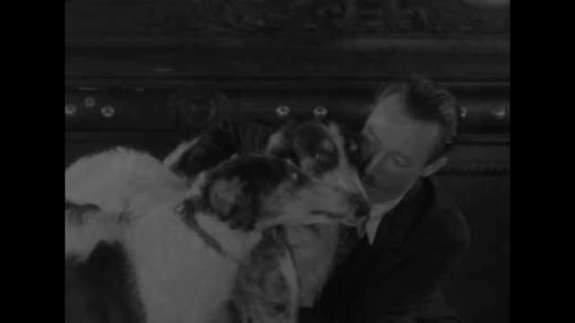 dogs who made good new york bowwow bravery canine heroes of 1930 get medals for having saved lives of owners / five owners holding or standing with... - bow pose stock videos & royalty-free footage