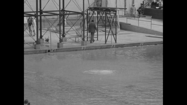 dorothy poynton new queen of high divers and eleanor holm backstroke champion show how they helped america make a sweep in the olympic finals /... - summer olympic games stock videos and b-roll footage