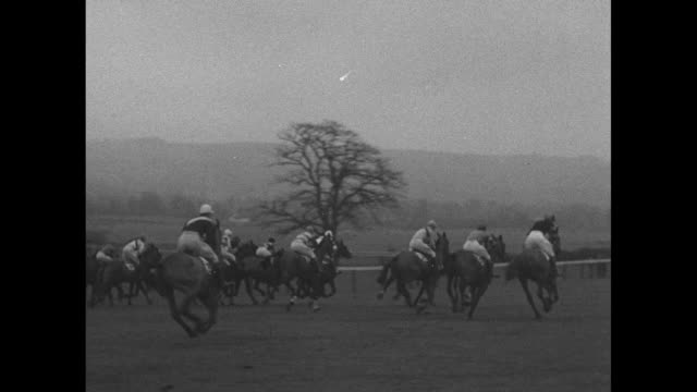 england gets ready for the grand nat'l / rear shot horses parade to post on foggy day at cheltenham racecourse / crowd in stands ready for the... - hurdling horse racing stock videos and b-roll footage