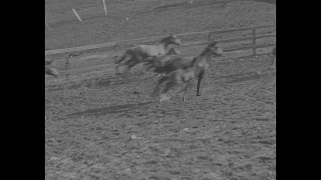 Horse Racing Rides Into Its Biggest Year / tiltdown shot horses race / worm'seye shot horses thunder past kicking up clods of dirt / caption Herbert...