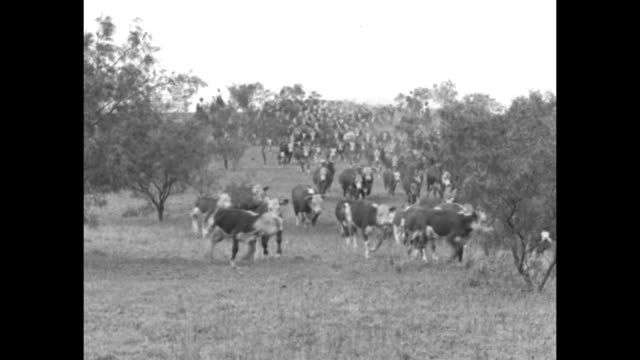 """huge cattle herd hits famous trail - lone star cowboys drive thousands of head from western texas into new mexico over old-time route"" / vs numerous... - cattle drive stock videos & royalty-free footage"
