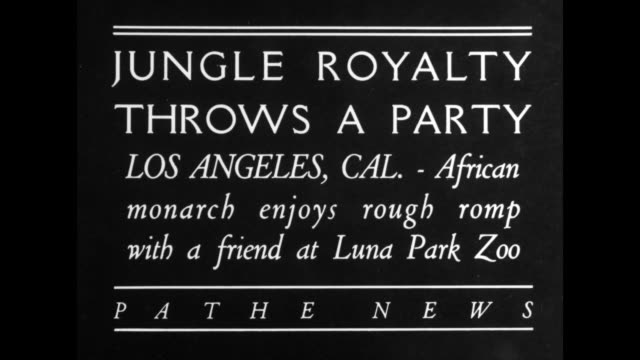 'Jungle royalty throws a party Los Angeles Calif African monarch enjoys rough romp with a friend at Luna Park Zoo' / female lion jumps on trainer and...