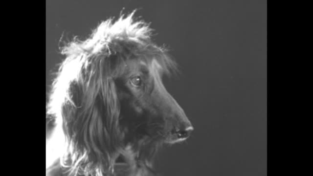man's best friend / a large group of people on the floor of madison square garden with contestants and judges / vs dogs including an irish setter... - messy stock videos & royalty-free footage