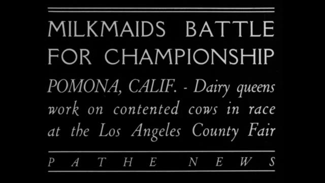 Milkmaids battle for championship Pomona Calif Dairy queens work on contented cows in race at the Los Angeles County Fair / women start milking row...