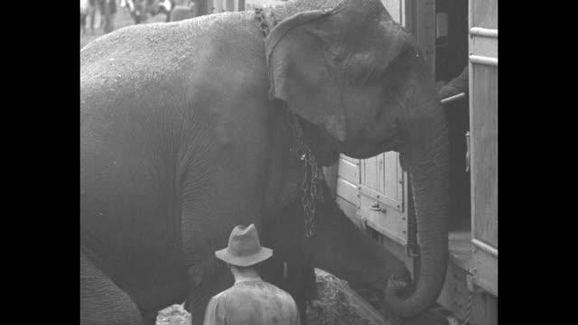 "vídeos de stock e filmes b-roll de ""modern noah's ark hits sawdust trail as circus day nears - everything loaded on cars when ringling bros. start the season"" / sarasota, fl: vs... - circo"
