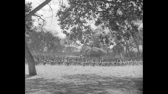 mother goose stock corners honking market 5000 foolish birds of a feather flock together at world's largest farm in santee calif / hundreds of geese... - washtub stock videos and b-roll footage